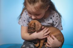Little girl with a puppy dog in her arms. Close-up. Studio photo stock photo