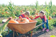 Little girl pushing wheelbarrow with pumpkins at farm field patch Stock Photography