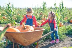 Little girl pushing wheelbarrow with pumpkins at farm field patch Royalty Free Stock Photo