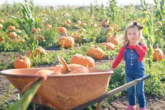 Little girl pushing wheelbarrow with pumpkins at farm field patch Stock Images