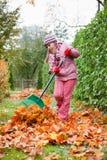 Little girl rake autumn leaves in garden. Little girl rake colorful fallen autumn leaves in garden royalty free stock images