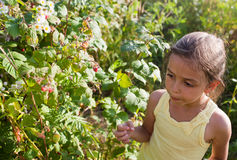 Little girl  and raspberries Royalty Free Stock Photo