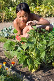 Little girl reaping beans Royalty Free Stock Photography