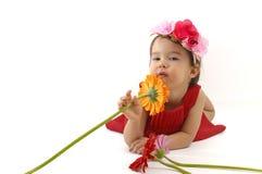 Little girl in red dress smelling a gerbera flower isolated. Little girl in red dress smelling a gerbera flower Royalty Free Stock Photos