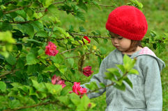 Little girl and red flowers Stock Images
