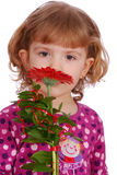 Little girl with red gerber flower Royalty Free Stock Images
