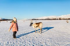 Little girl with reindeer Royalty Free Stock Photo