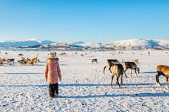 Little girl with reindeer Royalty Free Stock Images