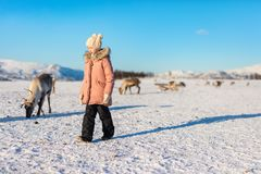 Little girl with reindeer. Little girl surrounded by reindeers on sunny winter day in Northern Norway stock image
