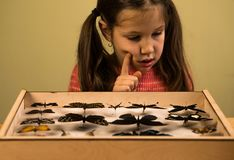Little Girl Researching Entomology Collection of Tropical Butterflies. Study Theme royalty free stock image