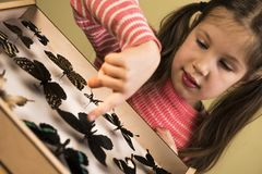 Little Girl Researching Entomology Collection of Tropical Butterflies. Study Theme royalty free stock photo