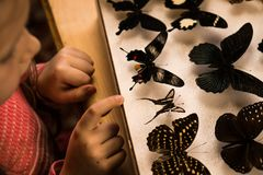 Little Girl Researching Entomology Collection of Tropical Butterflies. Study Theme stock photography
