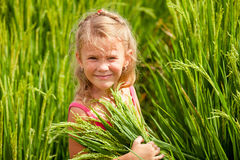 Little girl on the rice paddies Royalty Free Stock Photo