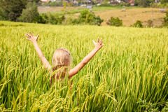 Little girl on the rice paddies Royalty Free Stock Image