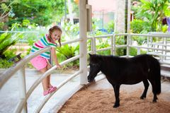 Child riding horse. Kids ride pony. Little girl riding horse on summer vacation in country ranch. Kids learn to ride horses. Children and animals friendship stock photos