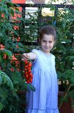 Little girl with ripe red tomatoes from the garden on the balcon Royalty Free Stock Photography