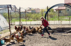 Little girl running after chickens. In an eco style farming Royalty Free Stock Images