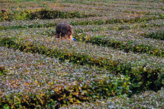 Little girl running in a hedge maze.  royalty free stock photos
