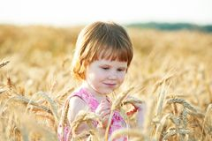 Little girl in rye wheat field Stock Photography