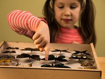 Little Girl Scrutinizes Entomology Collection of Tropical Butterflies. Study Theme royalty free stock images