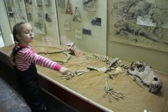Free Little Girl Shows The Skeleton Of An Ancient Animal. Royalty Free Stock Photo - 64716435