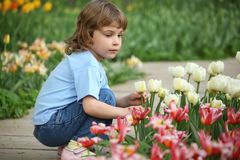 Little girl sits at bed with tulips Royalty Free Stock Image