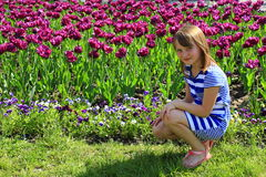 Little girl sits by lilac tulips Stock Image