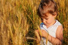 Little girl sits on wheaten field Royalty Free Stock Photo