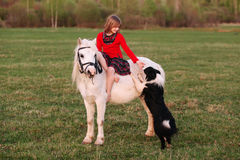 Little girl sitting on a white horse and palm dog Royalty Free Stock Photo
