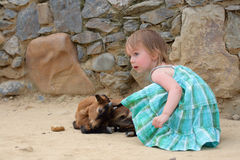 Little girl and small goat (kid). Little beauty girl (face not in focus) and small dark kid goat (in focus). Against a background of rocks wall royalty free stock images