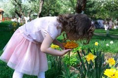 Little girl smell bright yellow flower at spring time royalty free stock photography