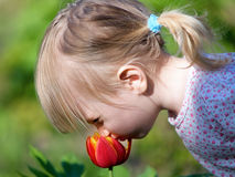 Little girl smell flower Royalty Free Stock Photography