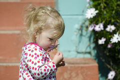 Little girl smell flower Royalty Free Stock Images