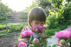 Little girl smell peony flower Royalty Free Stock Images