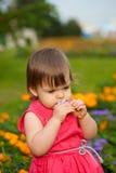 Little girl smelling flower Royalty Free Stock Image