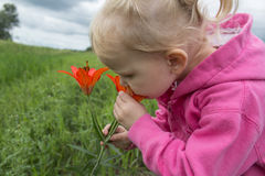 Little girl smelling a flower. Little blonde haired girl smelling some wild flowers Stock Photography