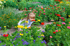 Little girl smelling the flower Royalty Free Stock Photo