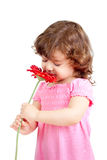 Little girl smelling flower, isolated on white. Cute little girl smelling flower gift, isolated on white Royalty Free Stock Photo