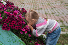 Little girl smelling flowers Royalty Free Stock Images