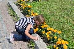 Little girl smelling flowers Stock Photography
