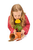 Little girl smelling potted flower Royalty Free Stock Photo