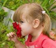 Little girl smelling rose Stock Photography