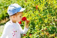 Little girl  smelling rose. In spring time Stock Photos