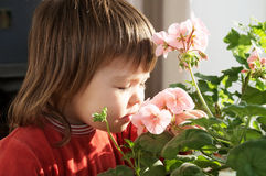 Little girl smelling spring flowers, kid feeling happiness,joyful people without spring allergy Stock Photo