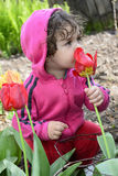 Little girl smelling a spring tulip. Royalty Free Stock Image