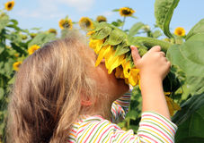 Little girl smelling sunflower Stock Photo