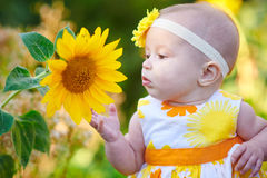 Little girl smelling sunflower at summer sunny day Royalty Free Stock Images