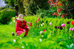 Little girl smelling tulips in the garden Royalty Free Stock Photo