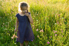 Little girl smelling wild flower on summer meadow Stock Photos