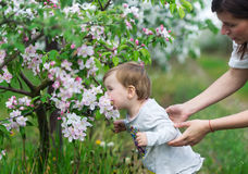 The little girl smells aroma of the blossoming apple. Royalty Free Stock Photos